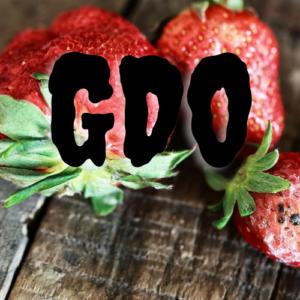 GDO 1 300x300 - GDO Söylencesi Ve Sorunlar