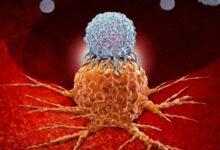 Bp Site 6 220x150 - Kanser İmmünoterapisi Nedir?