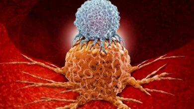 Bp Site 6 390x220 - Kanser İmmünoterapisi Nedir?